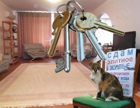 Как правильно снять квартиру от хозяина без посредников (2018)